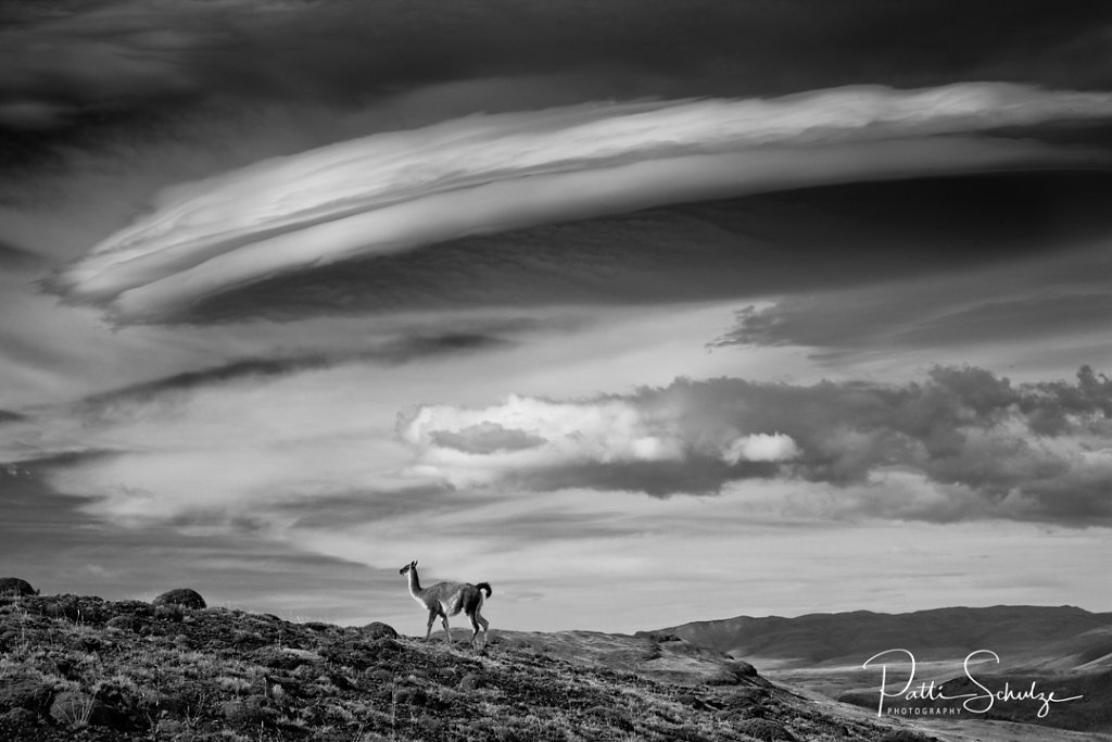 Guanaco and lenticular cloud