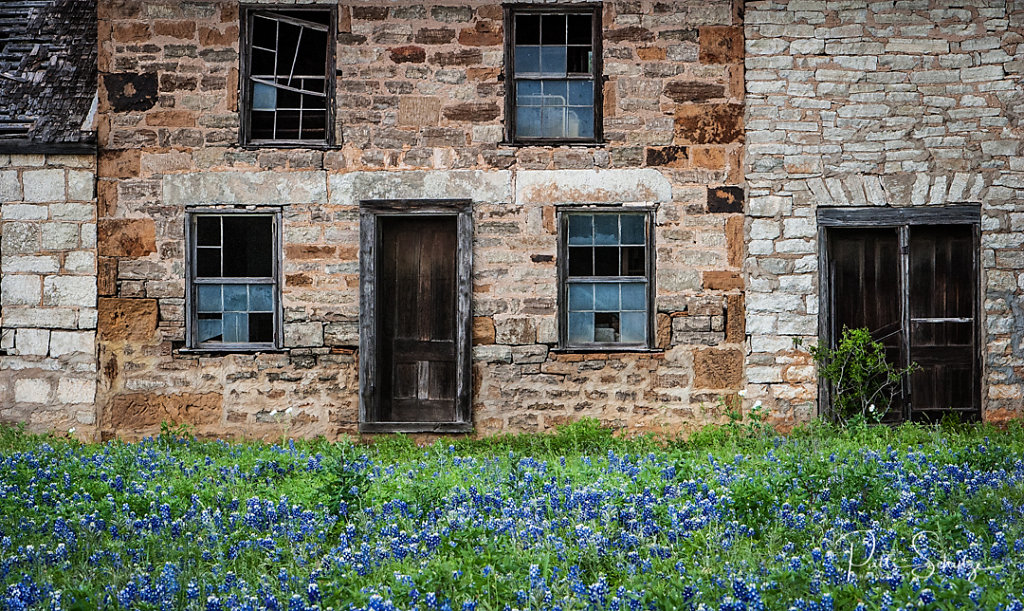 Bluebonnets and Windows